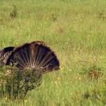 Turkey Hunting Video