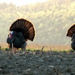Turkey Hunting Video